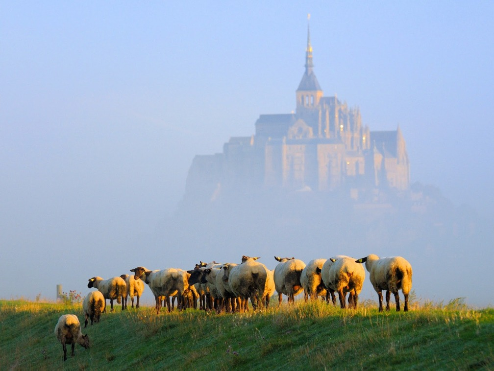 France Normandy Mont Saint-Michel with sheep in September via Wikimedia