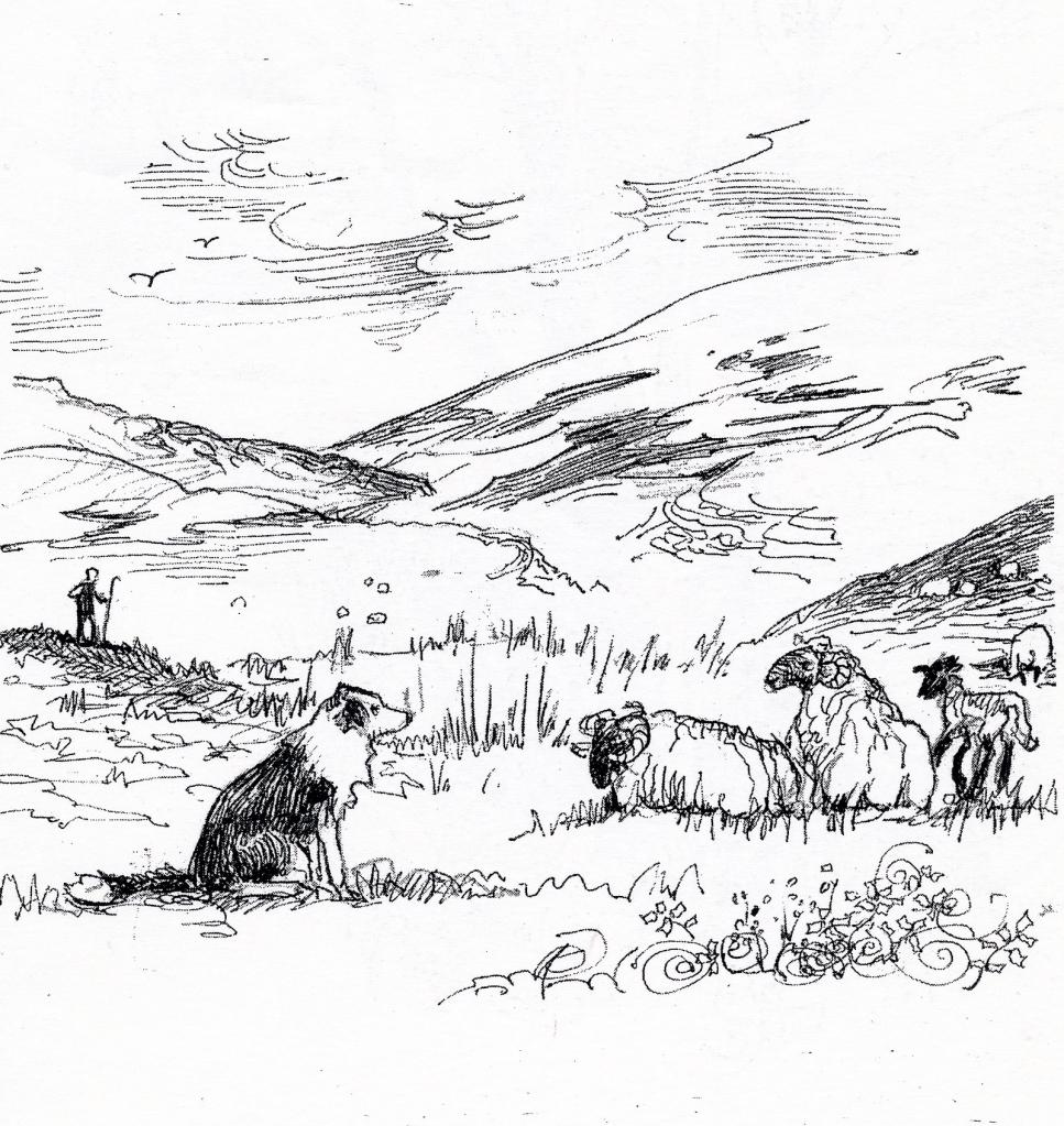 Moss with sheep, Glensaugh