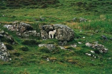 eigg 3, lamb in the rain