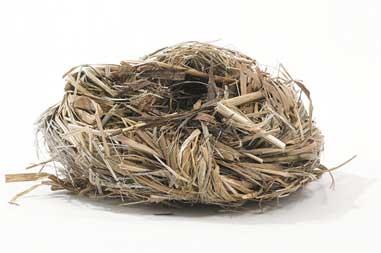 tinder-nest