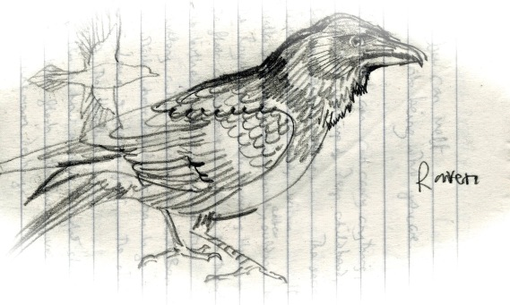 raven - Version 2