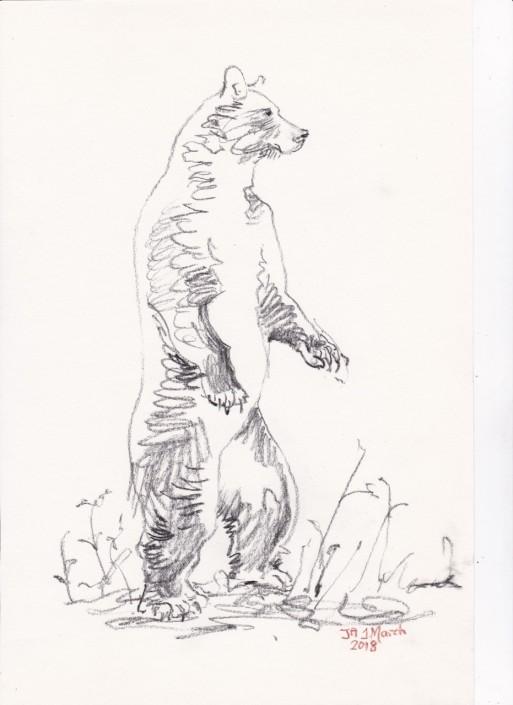 BEAR - 34th Gift