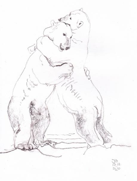 polarbears 1